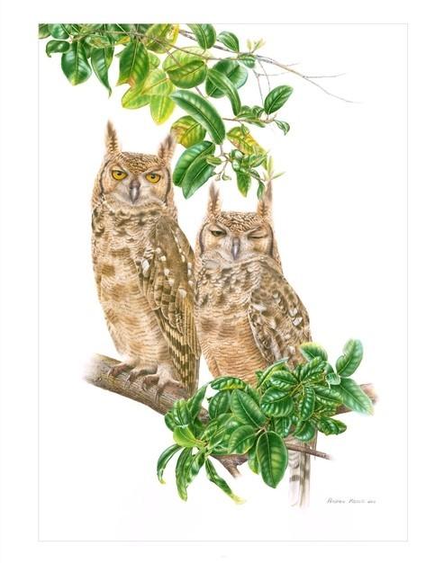 Spotted E owl