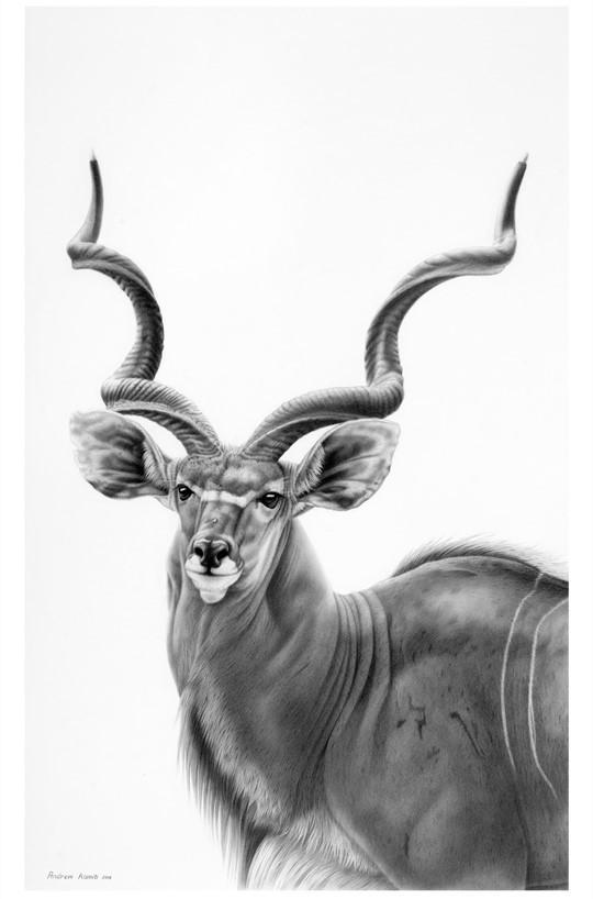 G Kudu