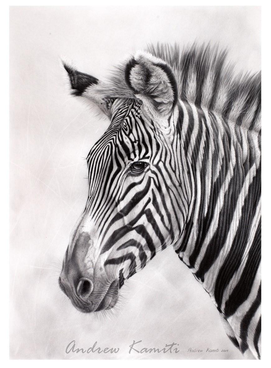 Mpala Stallion print2019