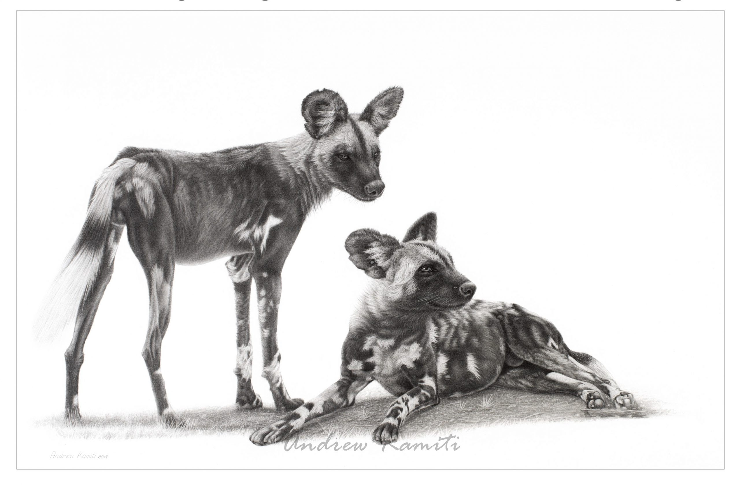 Wild dogs large