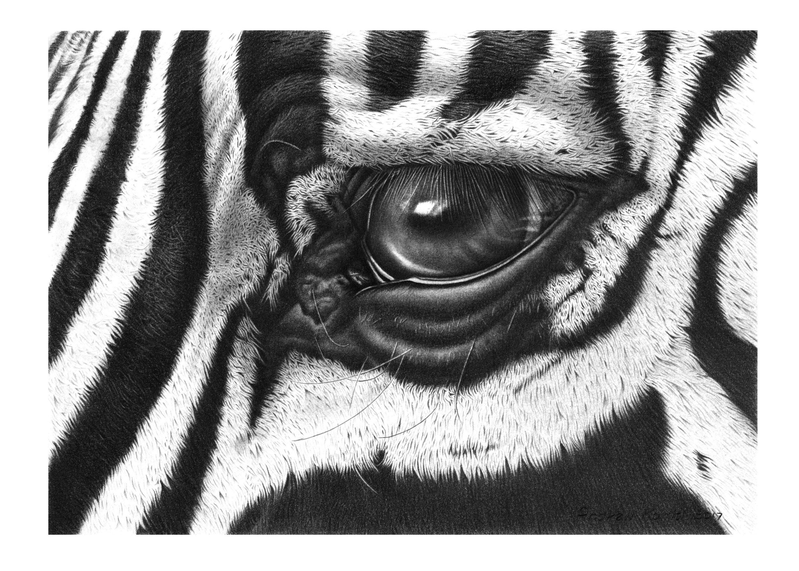 Z eye