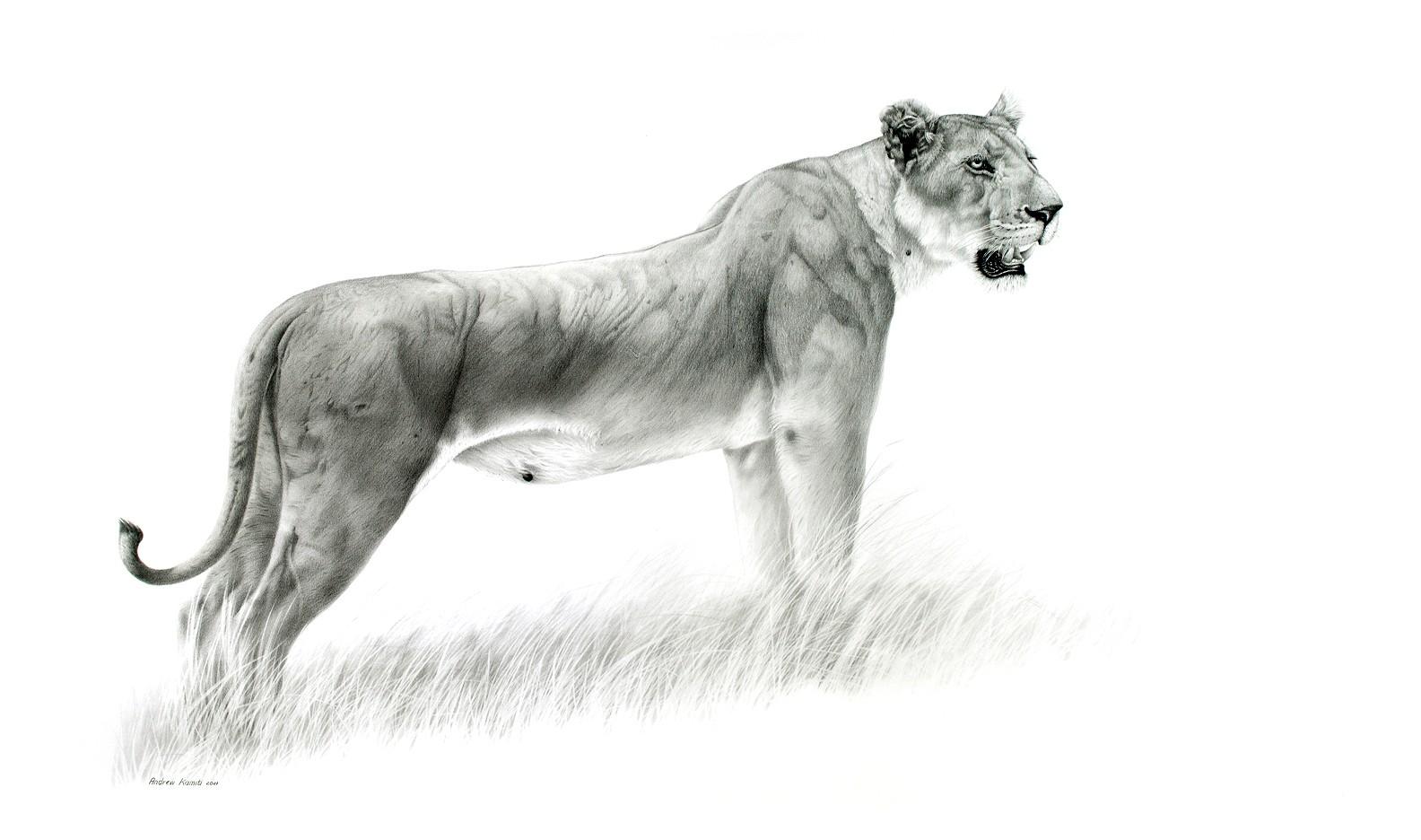 2020 Lioness