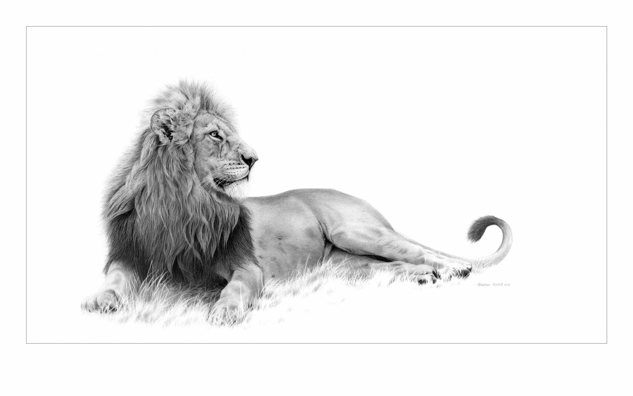 Male leo small 2021